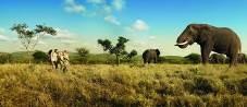 Südafrika_KPRN_Elefanten_Bäume_Safari