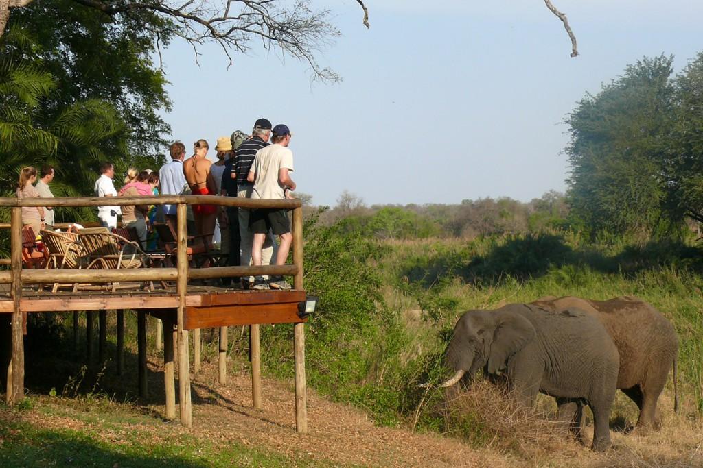 South African Airlines, KPRN; Elefanten, Menschen, Sträuche, grün, wildnis