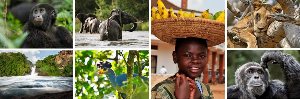 Header Uganda