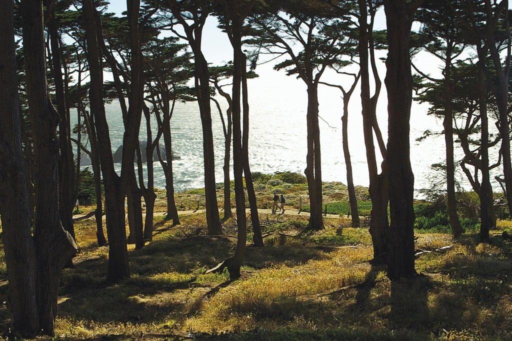 Wandern_Wald_San Francisco